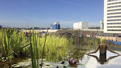 Kings Cross Pond Club: Of Soil and Water